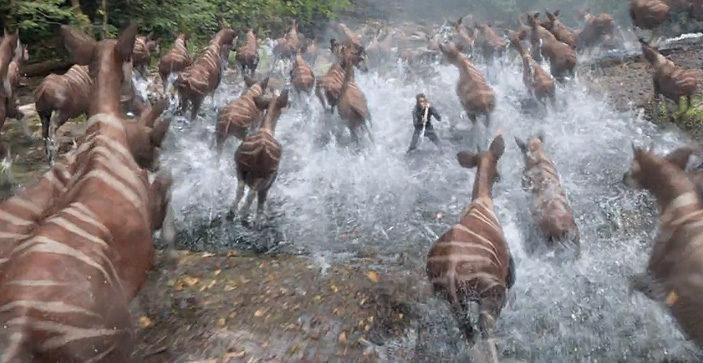 Okapi Stampede Breakdown Filmnosis